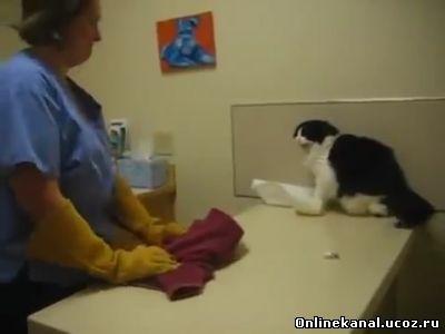 Коты боятся уколов